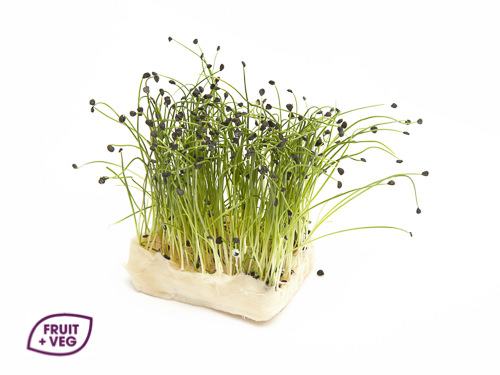 Rock Chive
