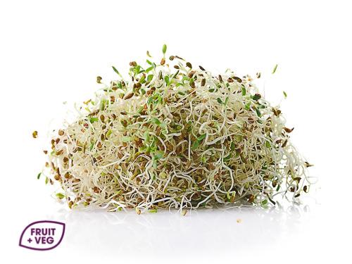 Radish Sprouts & Alfalfa Mix