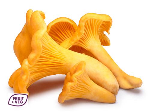 Girolles Mushrooms USA